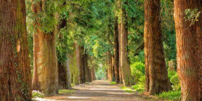 ścieżka w parku wśród drzew
