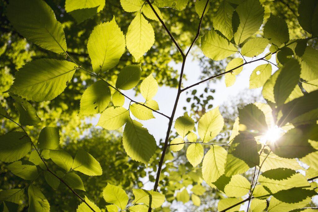 słońce przebijające się przez korony drzew