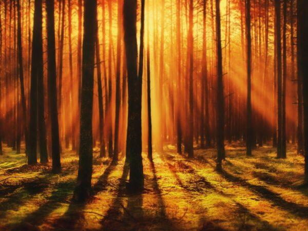 wschodzące słońce w lesie